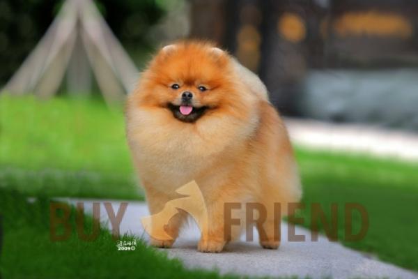 Корм для собак Royal Canin в Херсоне. Сравнить цены
